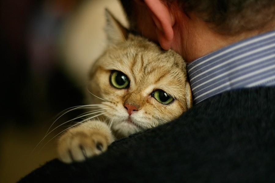 Любящий кот
